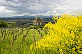Chapel in a vineyard under clouded sky, Kaiserstuhl, Baden-Wuerttemberg, Germany, Europe