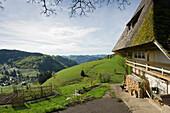 Traditional farmhouse at Muggenbrunn, Schauinsland, near Freiburg im Breisgau, Black Forest, Baden-Wuerttemberg, Germany, Europe