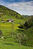 Idyllic landscape and traditional farmhouses in Praeg, near Todtnau, Black Forest, Baden-Wuerttemberg, Germany, Europe