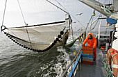 Shimp trawler bringing in the nets, Northern Frisia, North Sea , Schleswig Holstein, Germany