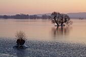 Frozen Oder valley in Winter, Lower Oder Valley International Park near Schwedt, Brandenburg, Germany