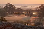 Fog at sunrise along the Oder river near Lebus, Frankfurt/Oder, Brandenburg, Germany