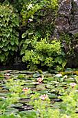 Pond with water lilies at Andre Hellers' Garden, Giardino Botanico, Gardone Riviera, Lake Garda, Lombardy, Italy, Europe