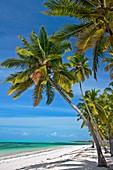 Jambiani beach  Zanzibar Island  Tanzania.