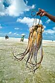 Jambiani beach, Fishermen  Zanzibar Island  Tanzania.