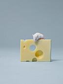 Mouse sitting on slice of cheese