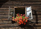 flowers decorating farm window. flowers decorating farm window