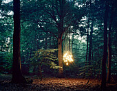 Lights hanging from tree in forest. Lights hanging from tree in forest