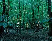 Lights hanging from trees in forest. Lights hanging from trees in forest