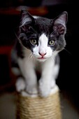 A kitten stands on a scratch post in Mexico City.