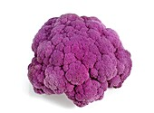 PURPLE CAULIFLOWER AGAINST WHITE BACKGROUND