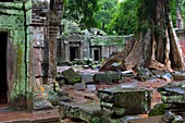 Ta Prohm is the modern name of a temple at Angkor, Siem Reap Province, Cambodia, built in the Bayon style largely in the late 12th and early 13th centuries and originally called Rajavihara  Located approximately one kilometre east of Angkor Thom and on th