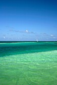 Exotic Clear Sea Water And Blue Sky With A Sailing Boat At The Horizon, Caye Caulker, Belize, Central America