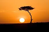 Sunrise in the Mara - Masai Mara National Reserve, Kenya