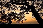 Sunset through the canopy - Yasuni National Park, Napo Province, Ecuador
