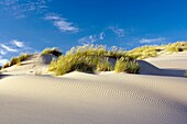 Sand Dunes - Oregon Dunes National Recreation Area - Reedsport, Oregon