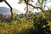 Blick über das Tal von Soller und den Ort Biniaraix durch Olivenbäume, Tramantura, Biniaraix, Soller, Mallorca, Spain