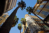 Low angle view of houses and palm trees at the old town, Malaga, Andalusia, Spain, Europe