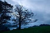 U.K, Cornwall, Tressilick Gardens at twilight