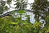 Cornwall, U.K,The Eden Project, Indoor the Rainforest Biome