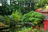 U.K ,Dorset,Compton Acres Gardens, the japonese garden