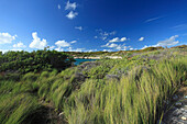 Coast area under blue sky, Indian Town Point, Antigua, West Indies, Caribbean, Central America, America