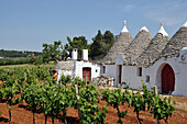 Viniculture near Alberobello with traditional Apulian dry stone huts with conical roof, Trulli, near Alberobello, Trullis, Valle d´Itria, Alberobello, Apulia, Italy