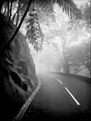 Foggy Bend in Tropical Road, Hong Kong, China