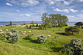 Gnitz peninsula and Achterwasser, Island of Usedom, Mecklenburg Western Pomerania, Germany, Europe