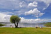 People on the banks of lake Balmer See, Achterwasser, Island of Usedom, Mecklenburg Western Pomerania, Germany, Europe