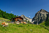 Alpine hut with cows in front of Gloedis and Ganot, Schober range, National Park Hohe Tauern, East Tyrol, Austria
