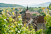 Panoramic view with vineyards, Riquewihr, Alsace, France