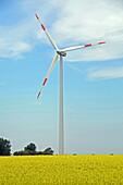 wind turbine with rape field in Mecklenburg-Western Pomerania