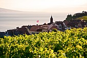 View of Lavaux and Lake Leman  Lavaux is part of a World Heritage Site and is a wine production area with terraces formed since the time of the Romans  Lake Geneva is located on the border between Switzerland and France