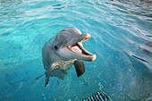 Dolphins in Zoopark Harderwijk editorial use only, no negative publicity