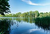 Lake Suckower Haussee in the sunlight, Uckermark, Land Brandenburg, Germany, Europe