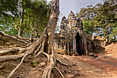 Tree in front of south gate Gate of Ta Phrom temple, Gopuram with the tower with faces, Angkor Wat, Temple, Angkor, Unesco World Cultural Heritage, Angkor, Cambodia