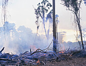 Tropical rainforest burning to make way for pasture