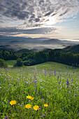 Wildflower meadow with view over Polhograjski Dolomiti and the Ljubljana Basin, Gorenjska, Krain, Slovenia