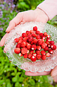 Woman holding a glass bowl of freshly picked strawberries from the garden, wild strawberries, harvest, Fruit, Bavaria, Germany