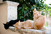 Kittens sat on a wall, cats, Sicily, Italy