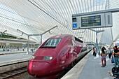 Thalys high speed train at platform in new Liège-Guillemins modern railway station designed by architect Santiago Calatrava in Liege Belgium
