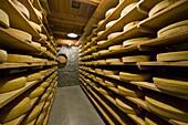 Aged cheeses, ´Casera´ Valli del Bitto  Gerola Alta, Lombardy, Italy