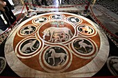 Mosaic floor with the wolf, symbol of Rome, Duomo dell´Assunta, Siena, Italy