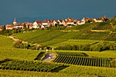 Stormy clouds over Vineyards of the Grand Cru below the village of Zellenberg, along the Wine Route, Alsace Haut-Rhin France