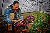 David Fortin In His Greenhouse With His Lettuces, Organic Market Gardener Living In The Creuse After Being A City Dweller In Bordeaux, France