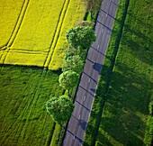 France, landscape, agriculture, graphic rape fields, shaft alignment, road, (air photo)