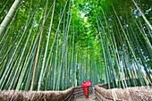 Japan,Kyoto,Arashiyama,Adashino Nembutsu-ji Temple,Bamboo Forest