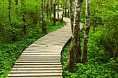 Boardwalk across wetland. Duthie Hill Mountain Bike park, King County Parks. Trees in woodland.