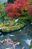 Tenryuji Temple is a Zen Buddhist temple and Garden near Kyoto, and is a national landmark. There are large koi pools.